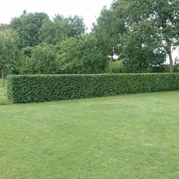 tuinaanleg-en-tuinonderhoud_Beringen_De Econier_7.jpg