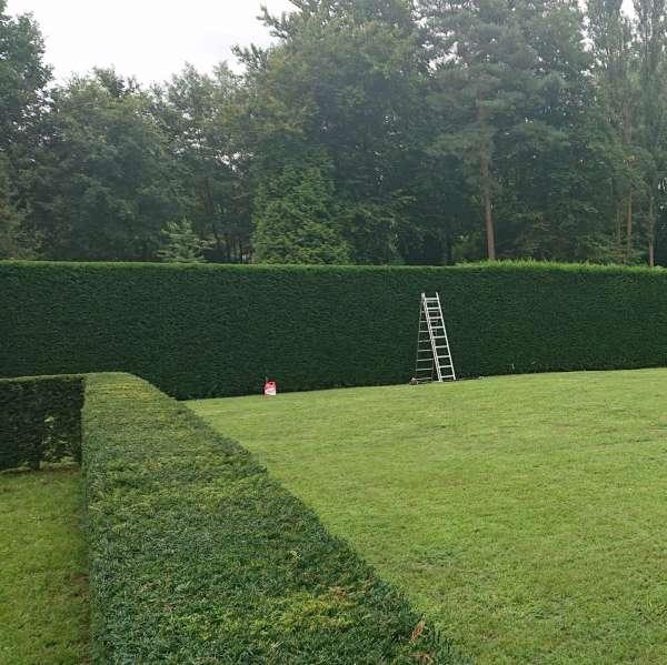 tuinaanleg-en-tuinonderhoud_Beringen_De Econier_6.jpg