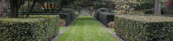 tuinaanleg-en-tuinonderhoud_Kapellen_Beeplant Nicolas Janssens_3.jpg
