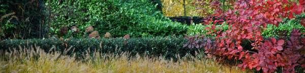tuinaanleg-en-tuinonderhoud_Kapellen_Beeplant Nicolas Janssens_4.jpg
