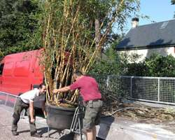 tuinaanleg-en-tuinonderhoud_Brasschaat_Van Gael - Verzorging van Groen_3.jpg