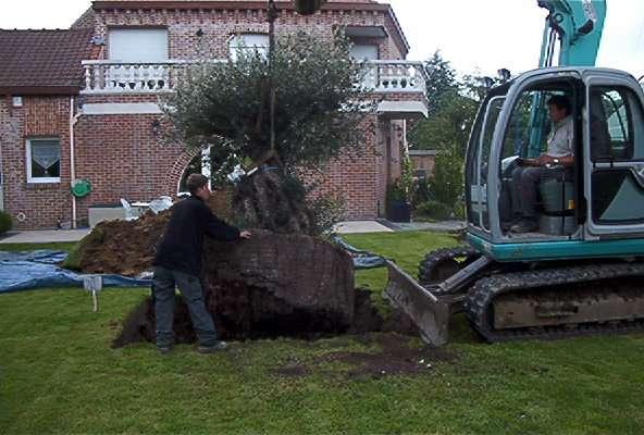 tuinaanleg-en-tuinonderhoud_Wervik_Tuinen Vanrobaeys_6.jpg