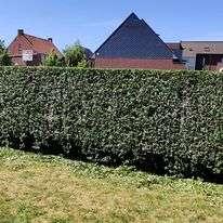 tuinaanleg-en-tuinonderhoud_Zedelgem_Denolf / Wouter_5.jpg