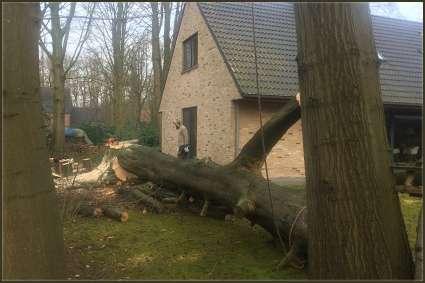 tuinaanleg-en-tuinonderhoud_Kortrijk_Lukas ameye_7.jpg