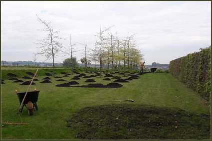 tuinaanleg-en-tuinonderhoud_Kortrijk_Lukas ameye_6.jpg