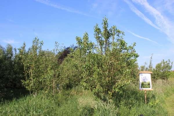 tuinaanleg-en-tuinonderhoud_Izegem_Eco Gardens_2.jpg