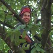 Treebird Boomverzorging.jpg